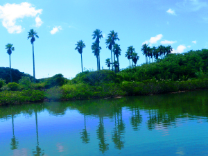 mangloe